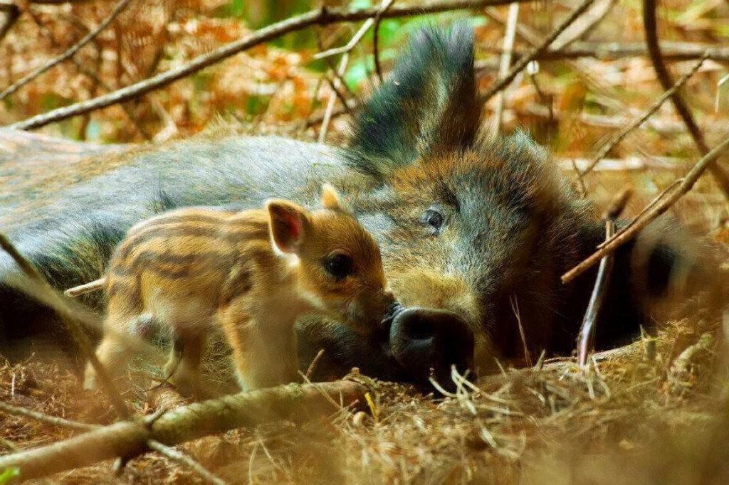 动物母亲节_图1-27