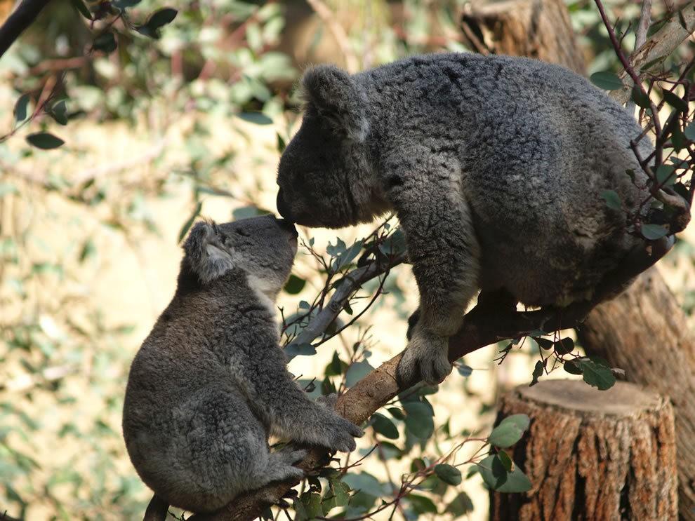 动物母亲节_图1-28