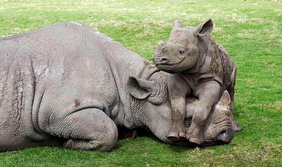 动物母亲节_图1-30