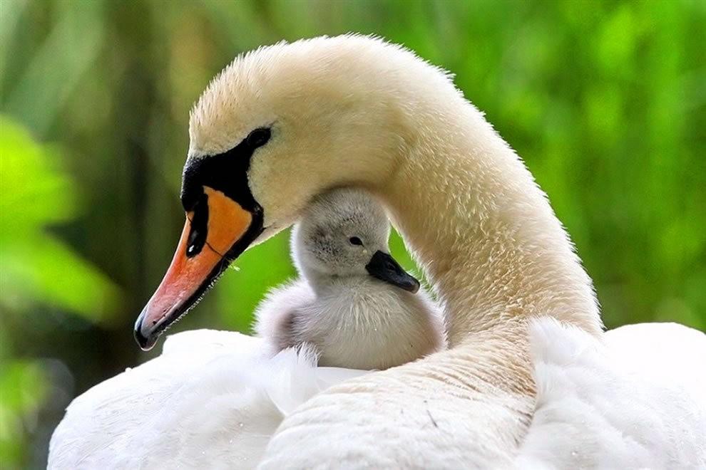 动物母亲节_图1-32