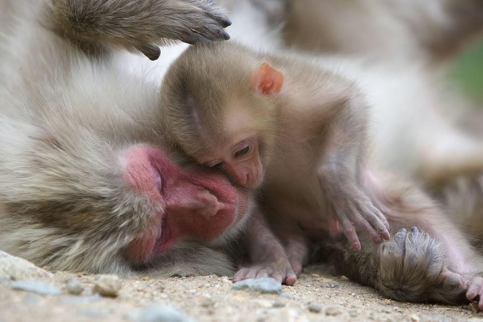 动物母亲节_图1-33
