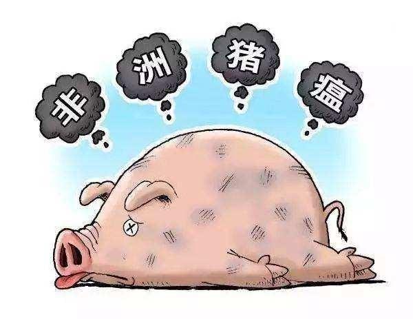 """江淳:己亥年顶级""""网红""""非猪莫属_图1-1"""