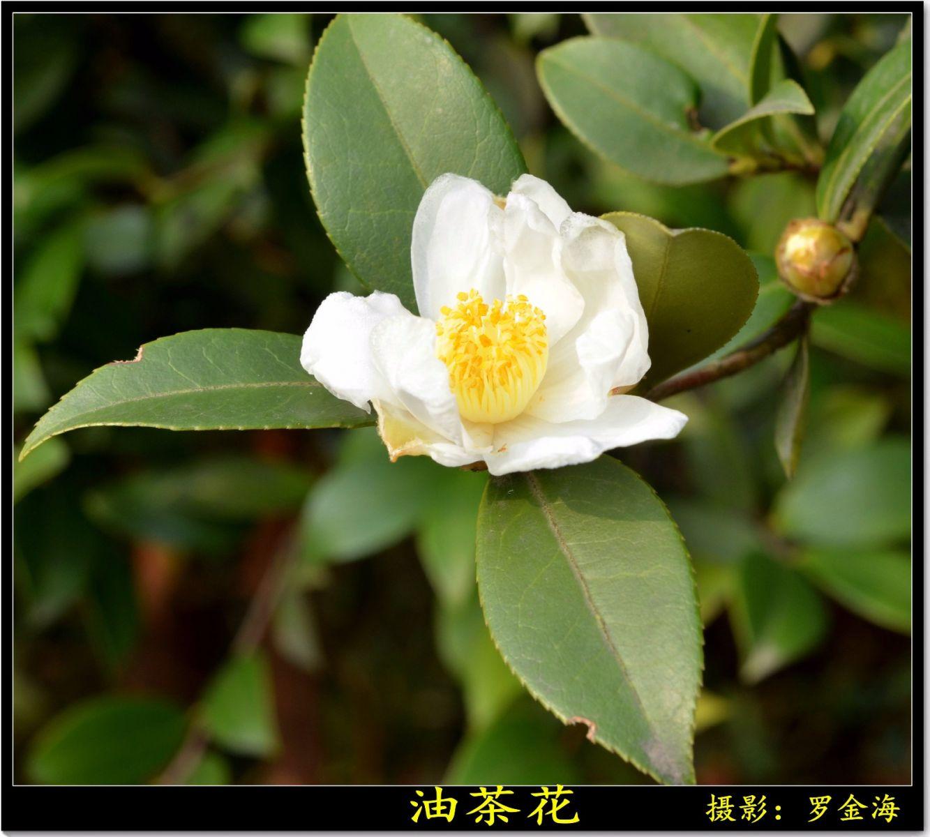 立冬日(七绝三首)_图1-5