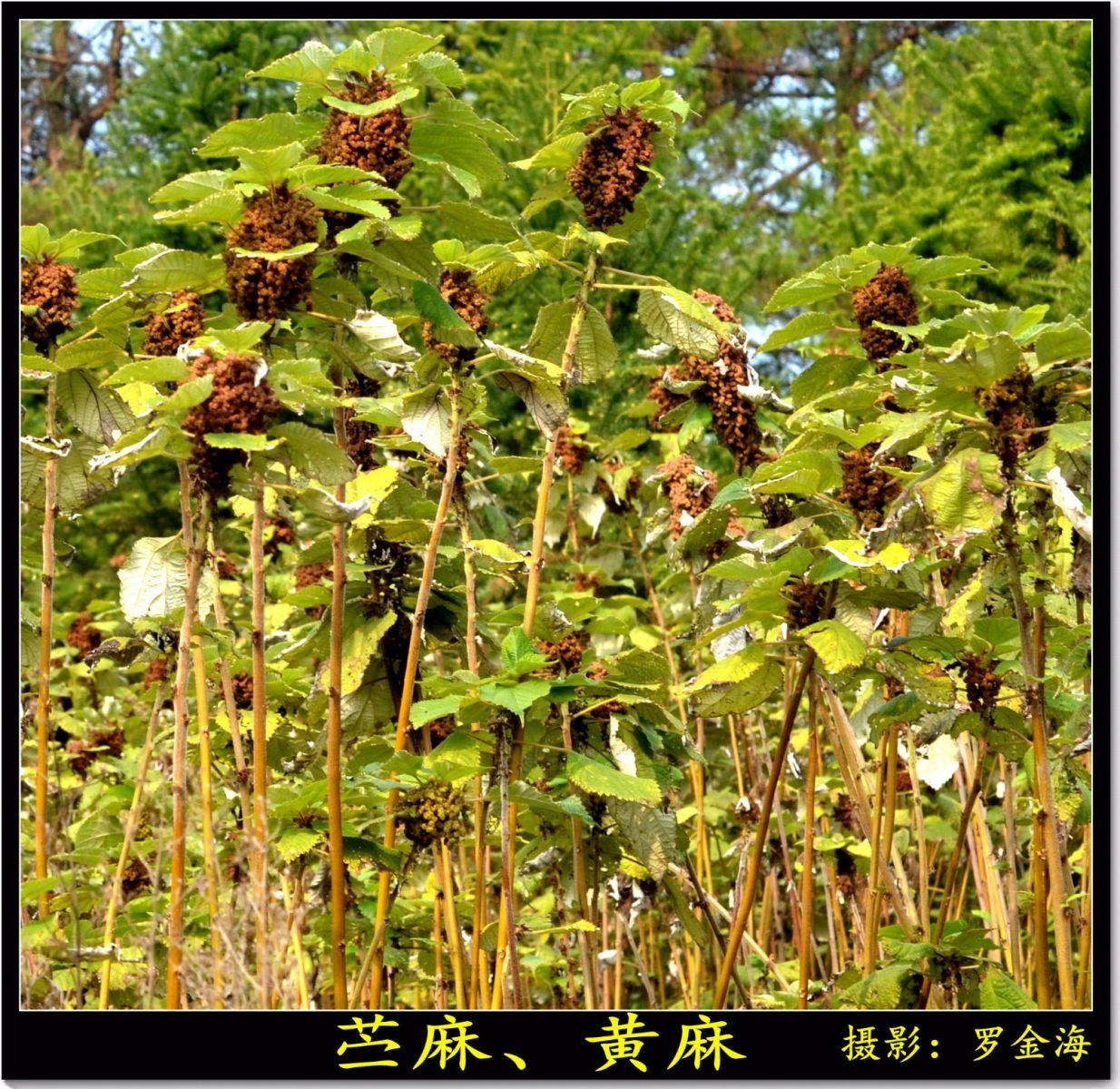 立冬日(七绝三首)_图1-7