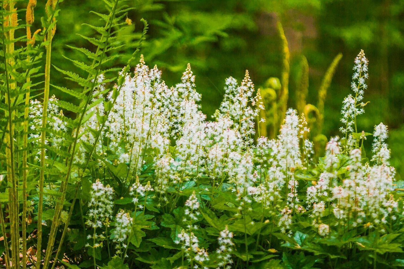 Chanticleer花园,有梦想的季节_图1-13