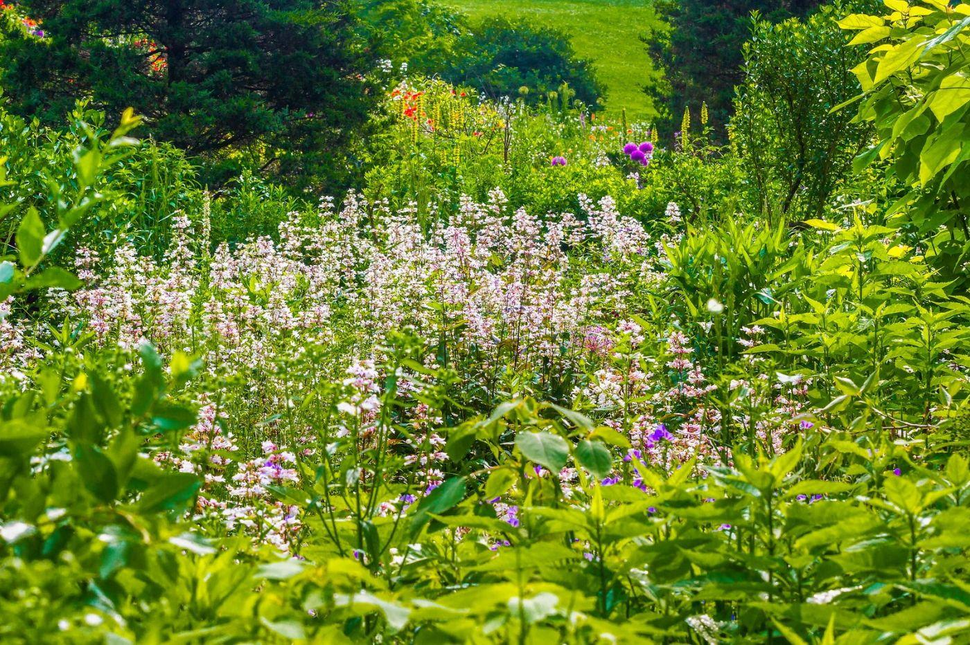 Chanticleer花园,有梦想的季节_图1-17