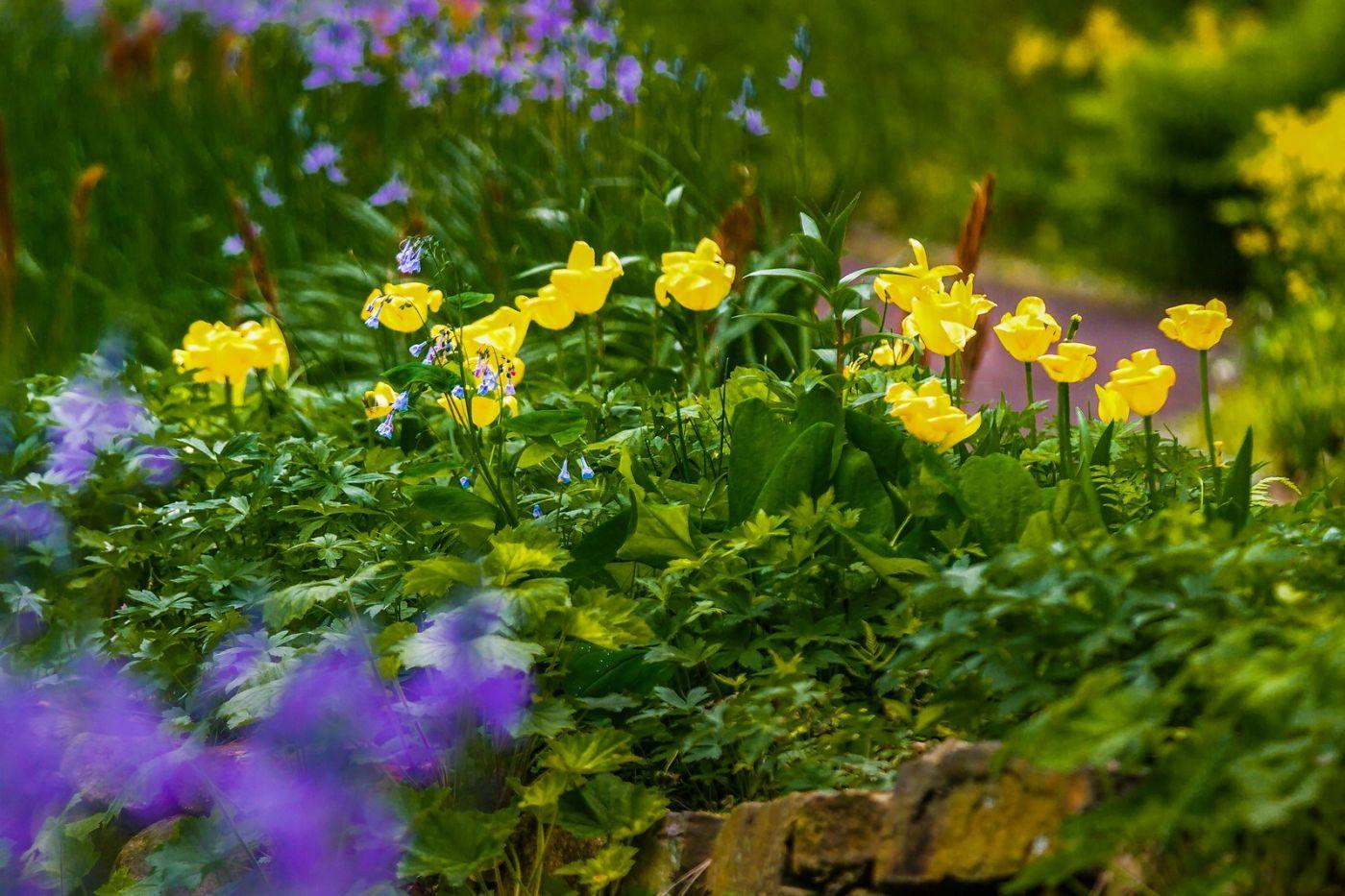 Chanticleer花园,有梦想的季节_图1-14