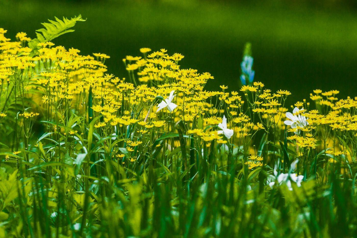 Chanticleer花园,有梦想的季节_图1-15