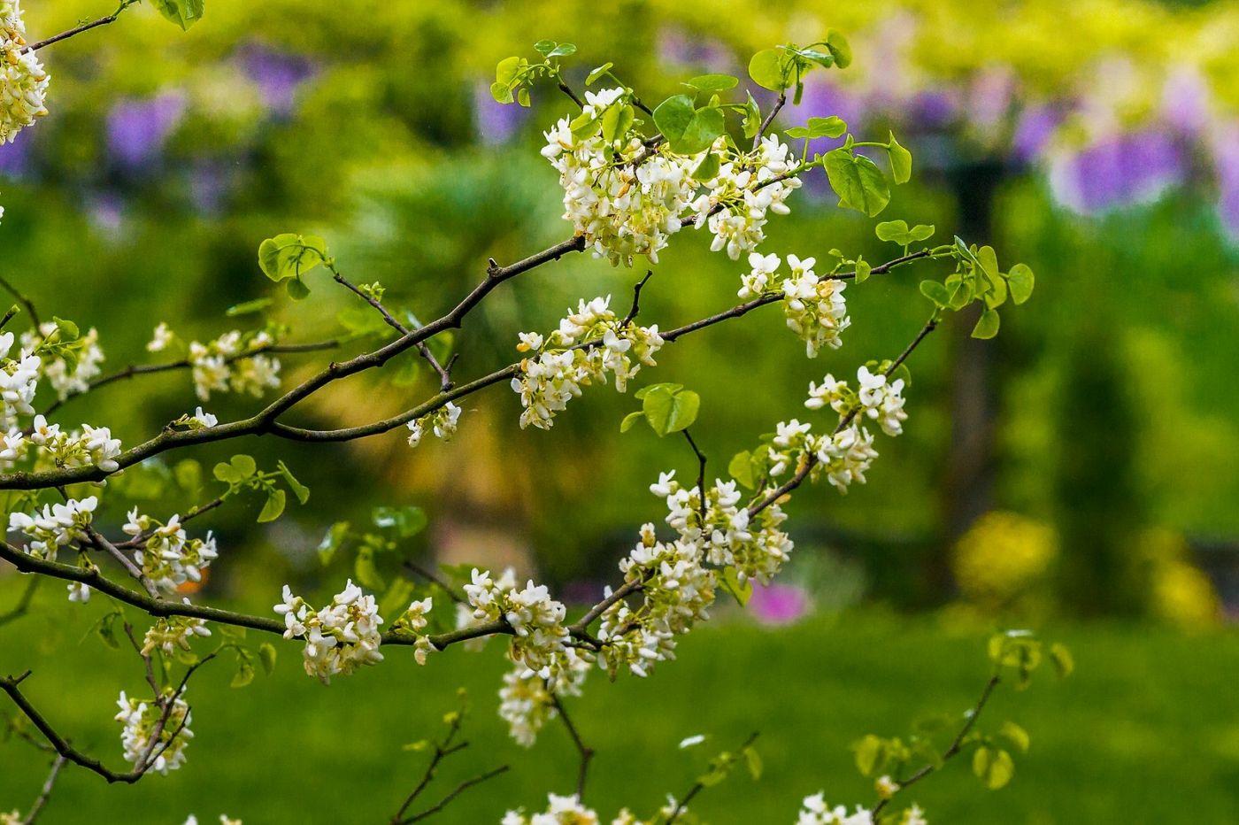 Chanticleer花园,有梦想的季节_图1-16