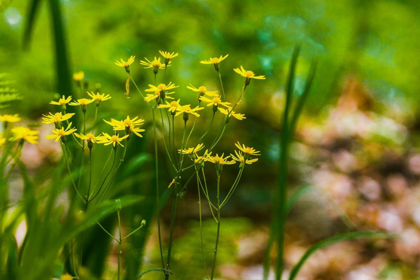 Chanticleer花园,有梦想的季节_图1-11