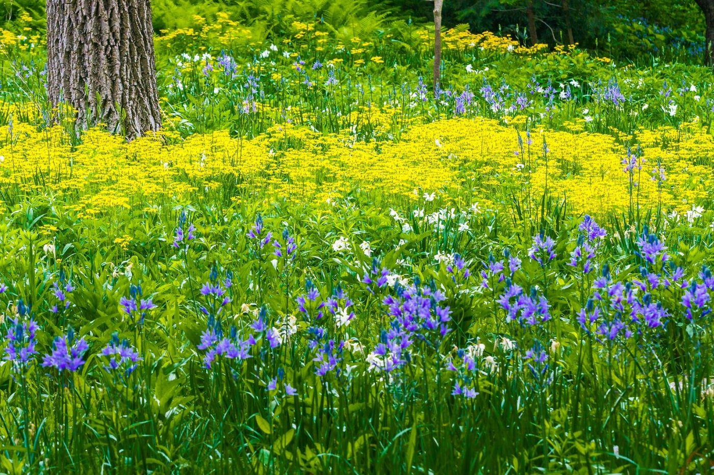 Chanticleer花园,有梦想的季节_图1-12