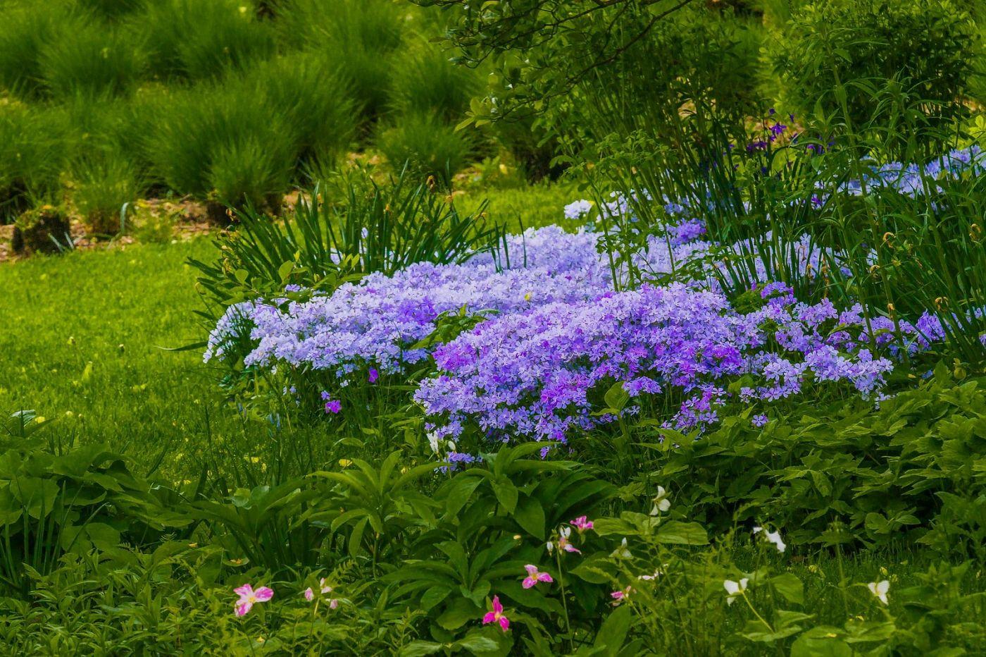Chanticleer花园,有梦想的季节_图1-9