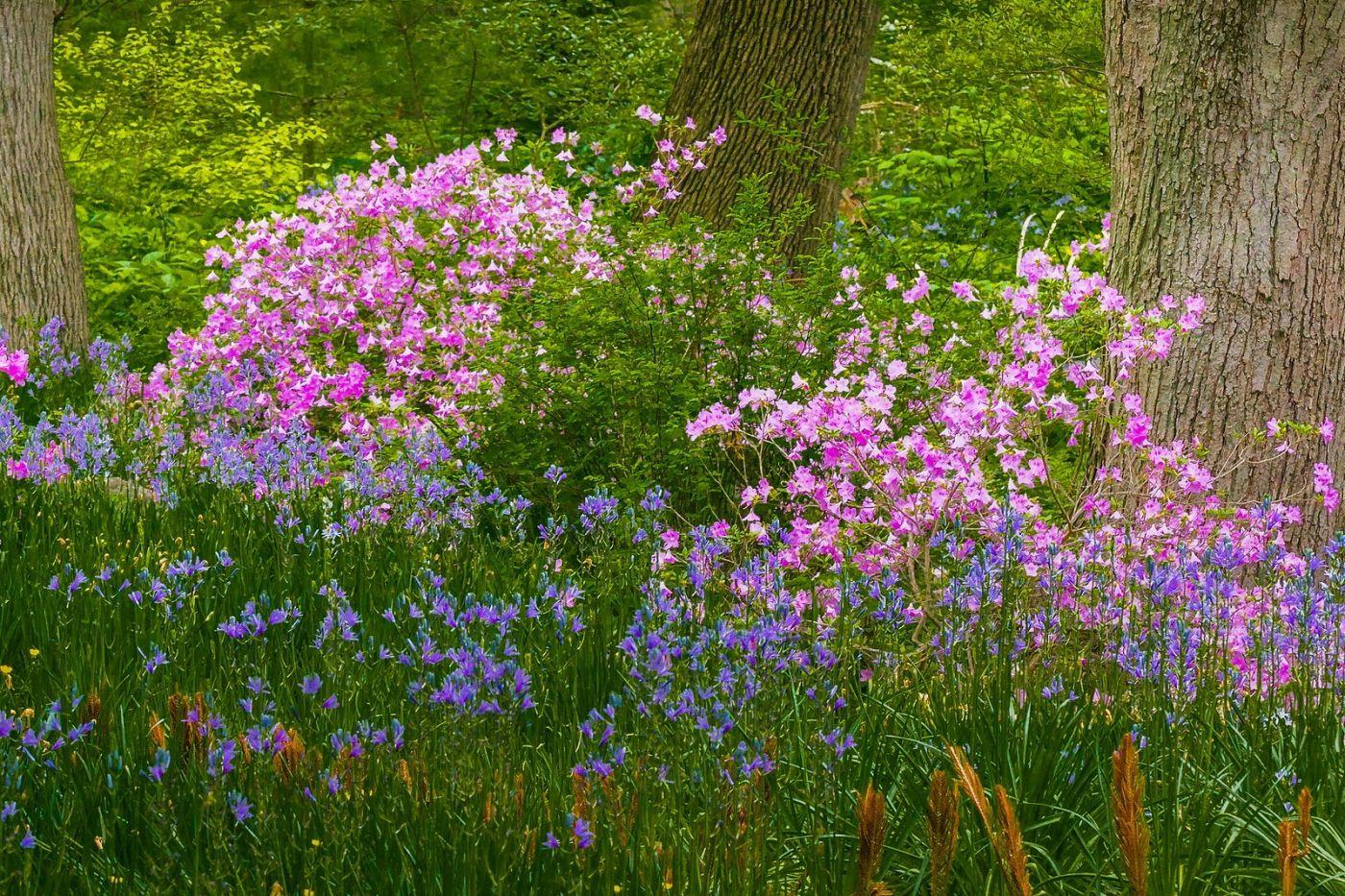 Chanticleer花园,有梦想的季节_图1-10