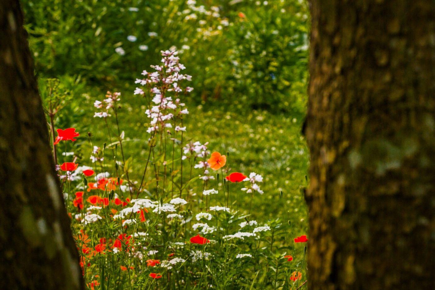 Chanticleer花园,有梦想的季节_图1-6
