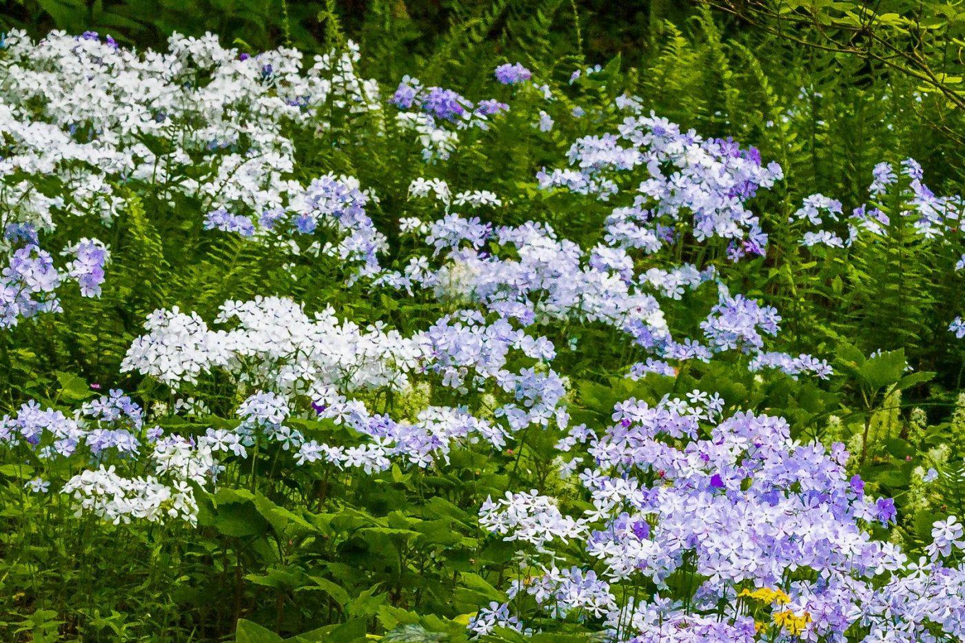 Chanticleer花园,有梦想的季节_图1-5