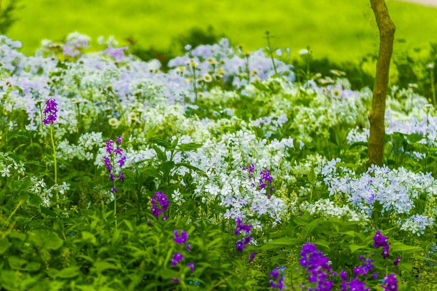Chanticleer花园,有梦想的季节_图1-7