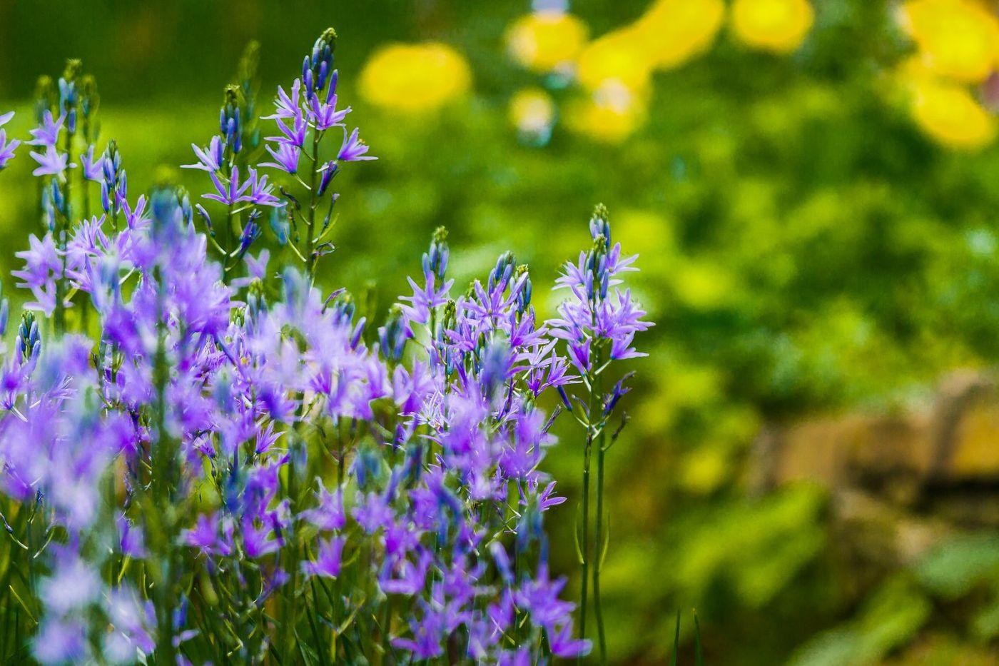Chanticleer花园,有梦想的季节_图1-8
