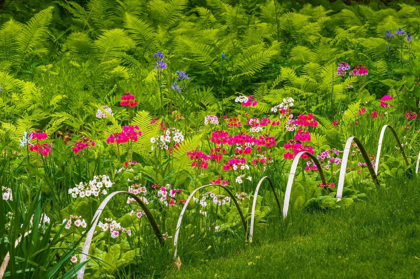 Chanticleer花园,有梦想的季节_图1-4
