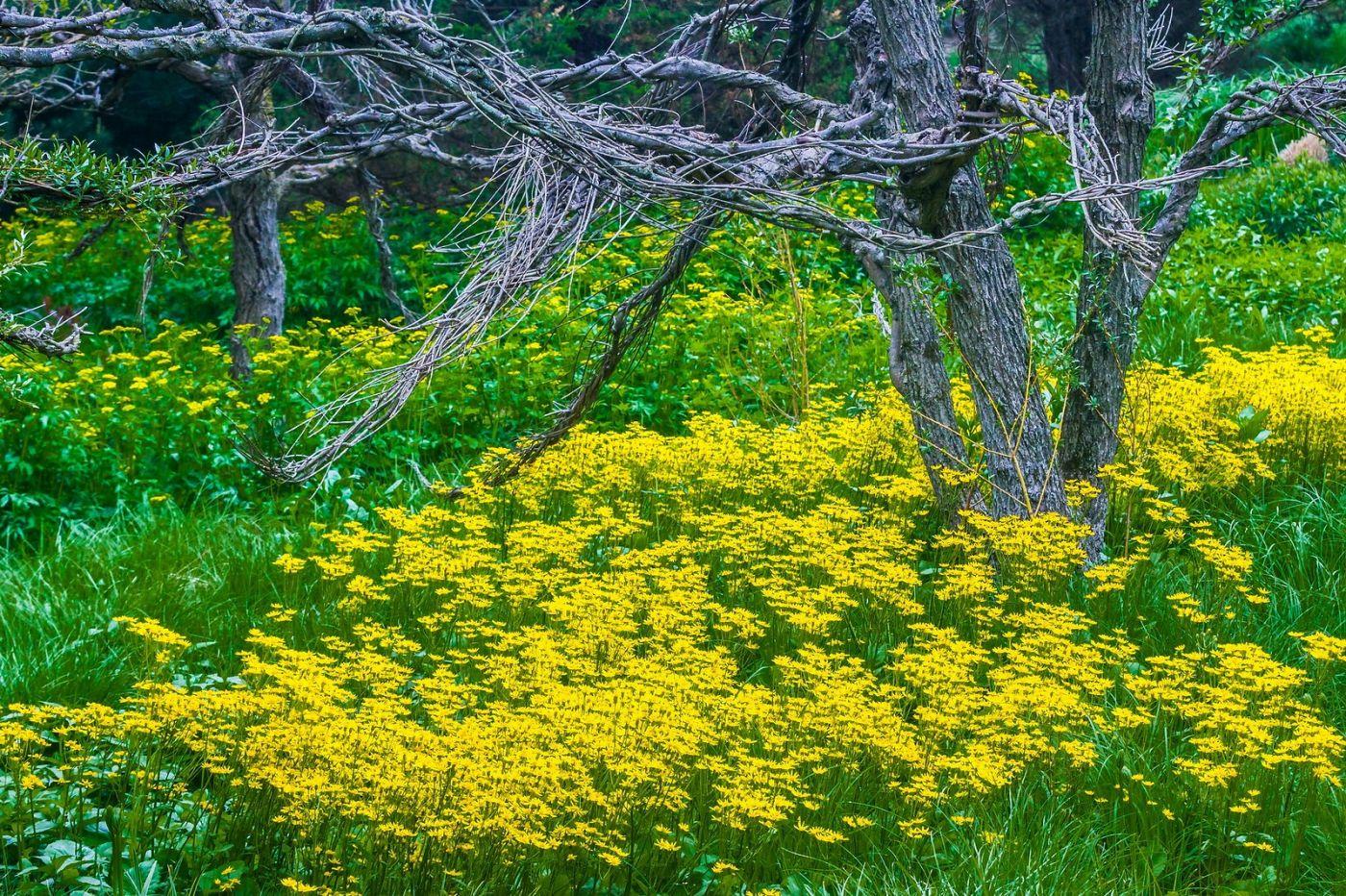Chanticleer花园,有梦想的季节_图1-3