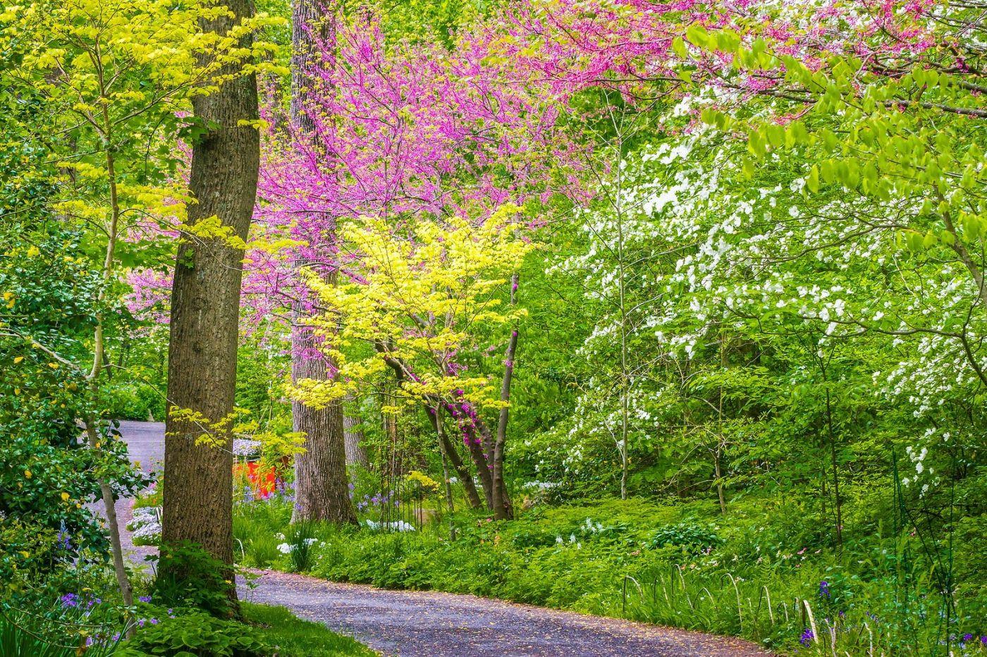 Chanticleer花园,有梦想的季节_图1-1