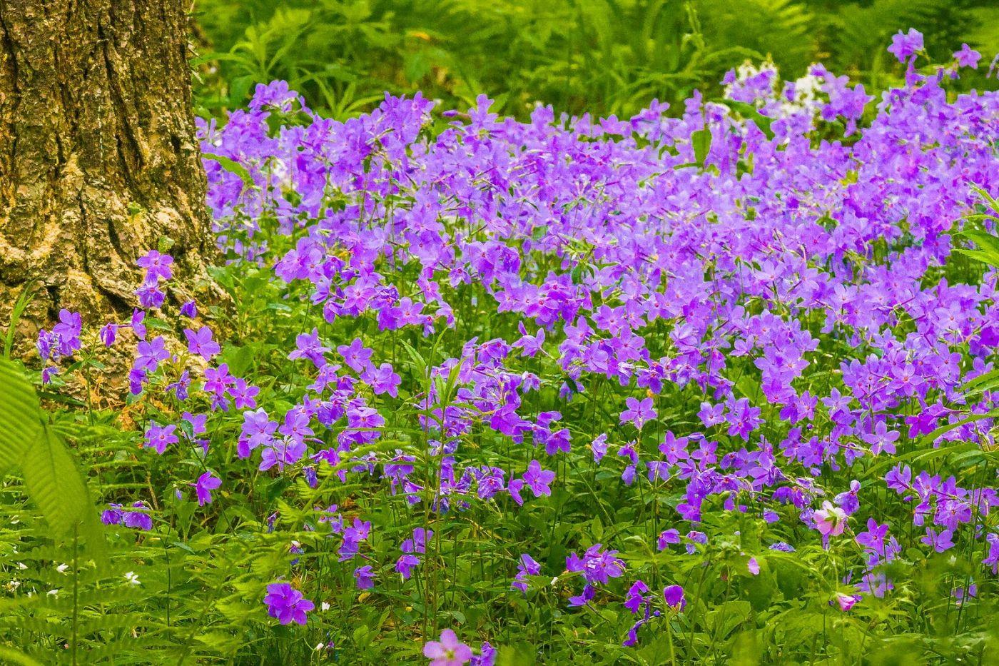 Chanticleer花园,有梦想的季节_图1-21