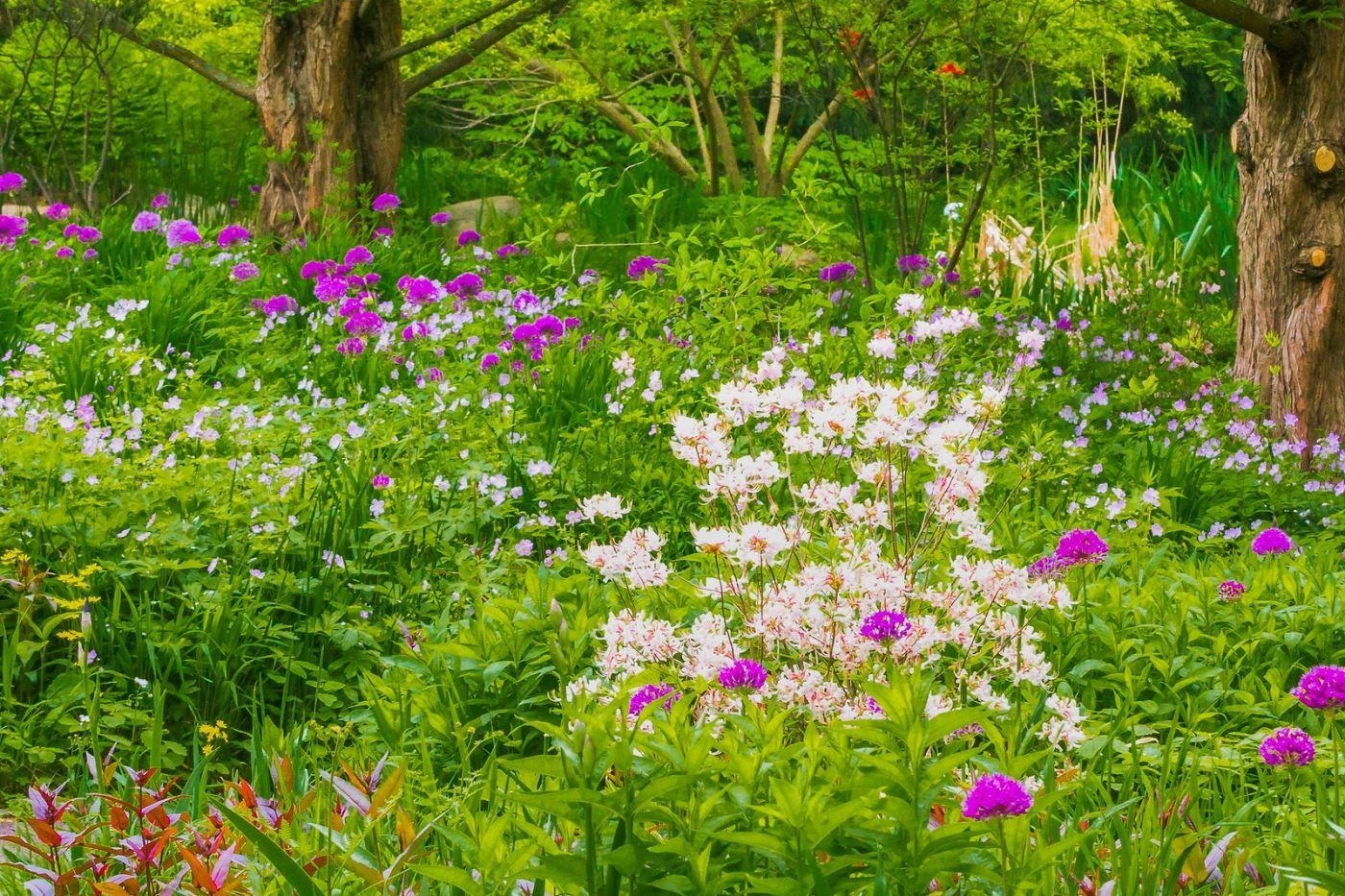 Chanticleer花园,有梦想的季节_图1-22