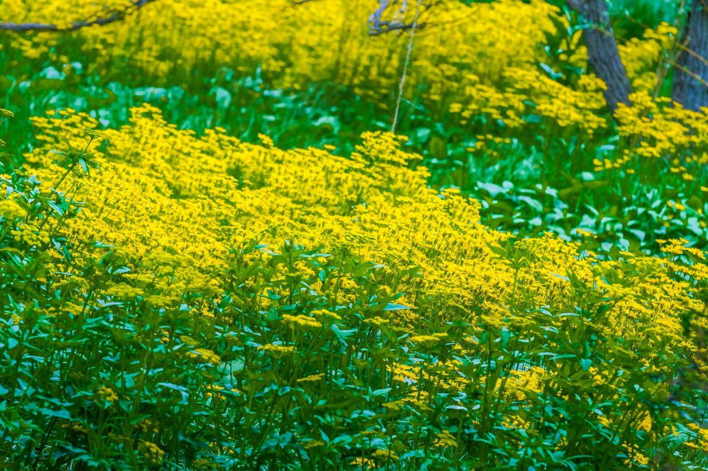 Chanticleer花园,有梦想的季节_图1-2
