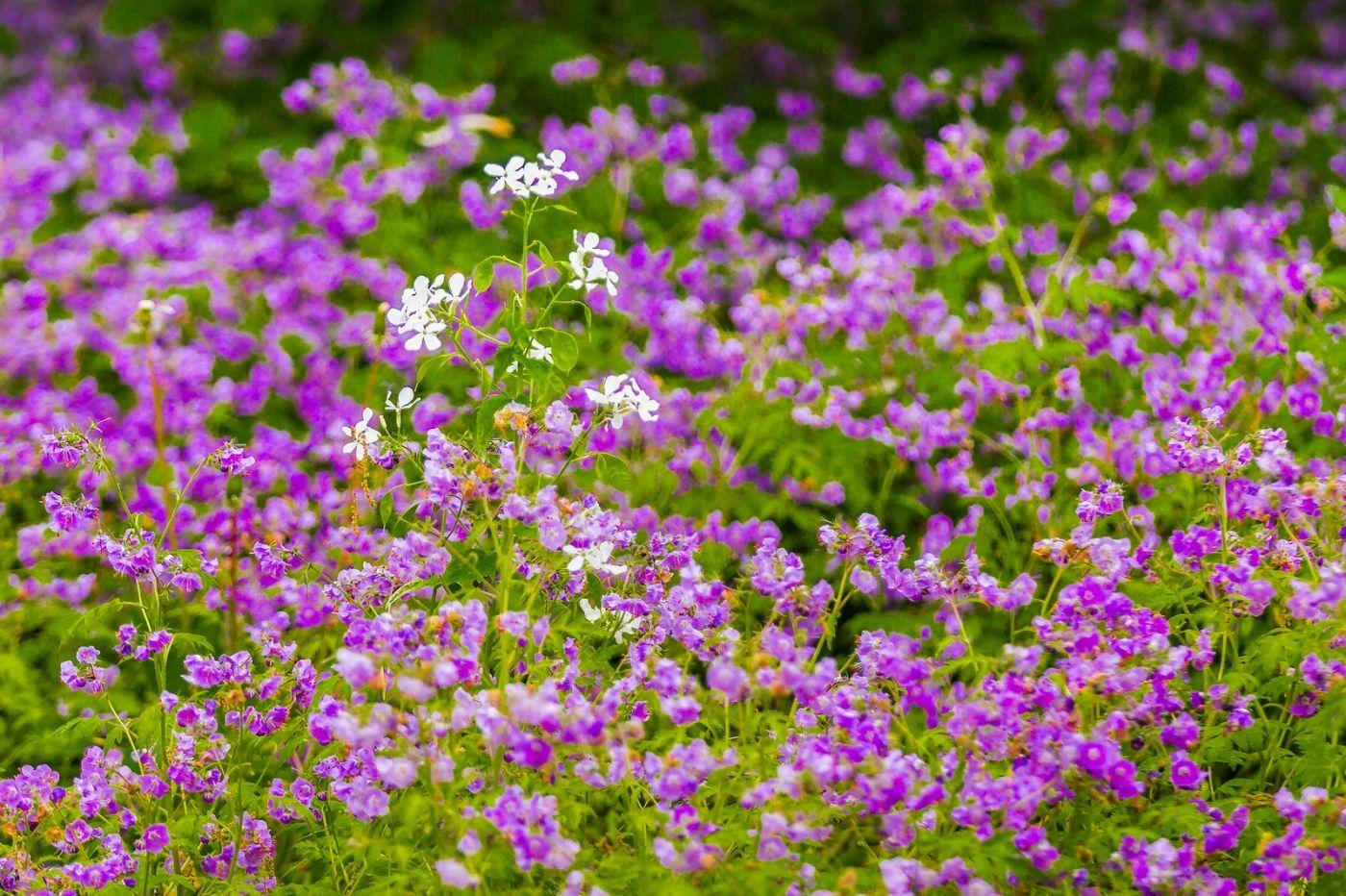 Chanticleer花园,有梦想的季节_图1-23