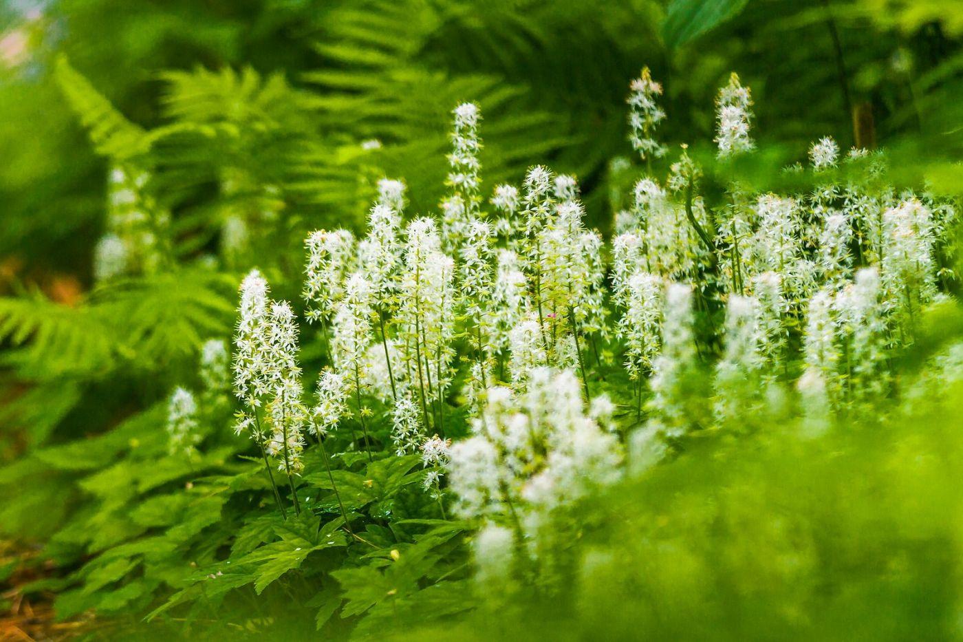 Chanticleer花园,有梦想的季节_图1-28
