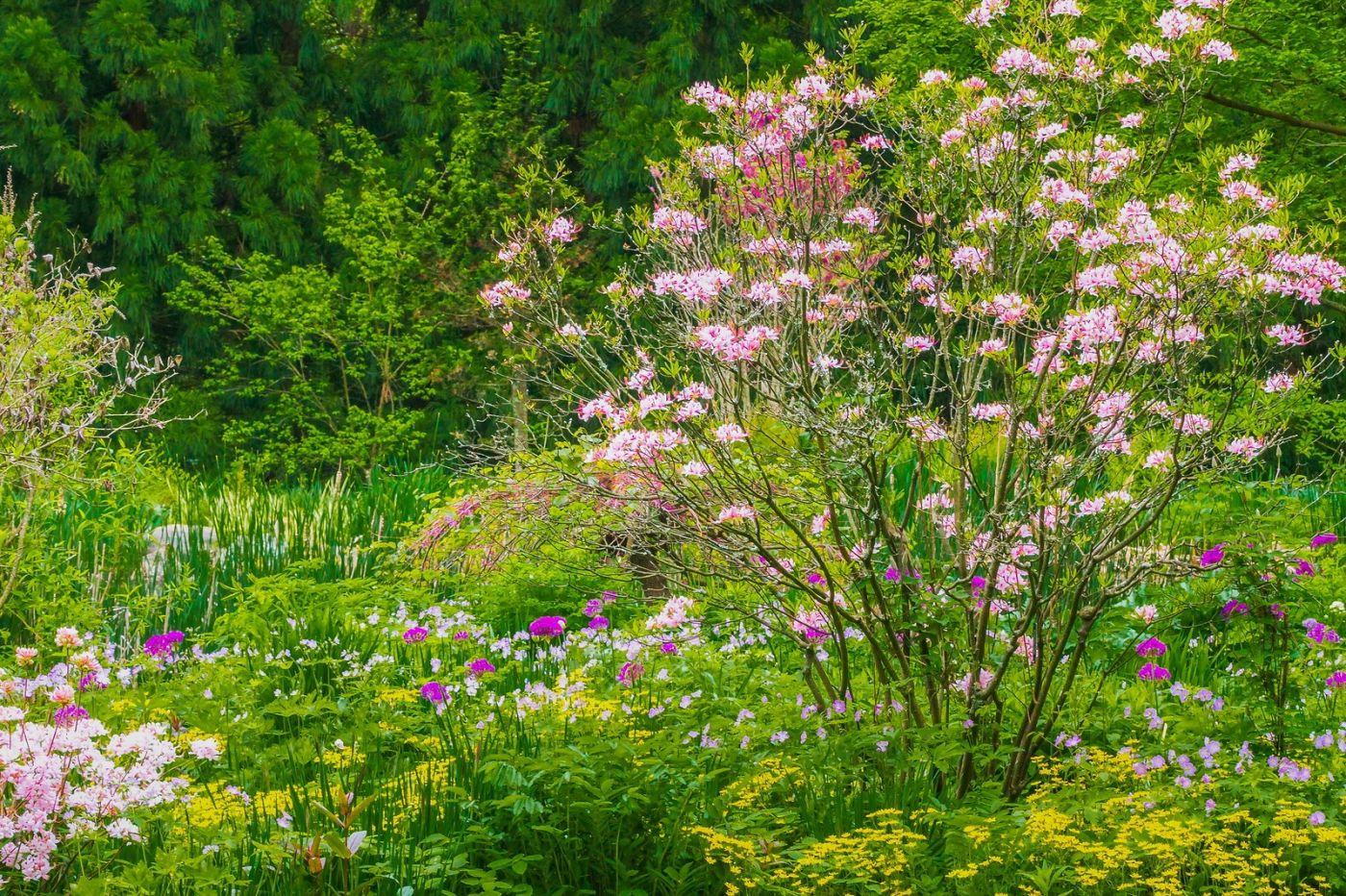 Chanticleer花园,有梦想的季节_图1-24