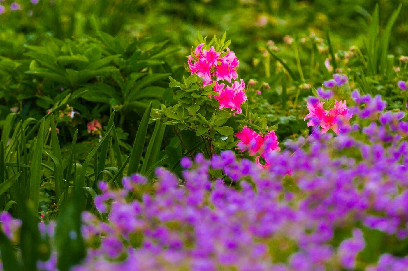 Chanticleer花园,有梦想的季节_图1-27
