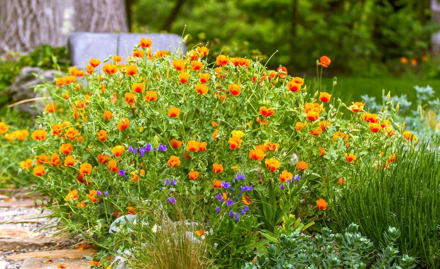 Chanticleer花园,有梦想的季节_图1-26