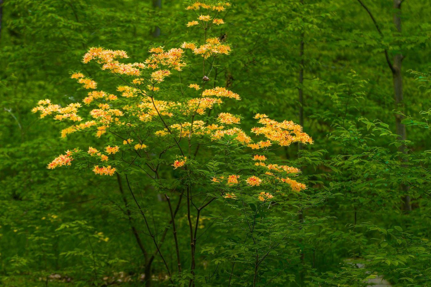 Chanticleer花园,有梦想的季节_图1-29