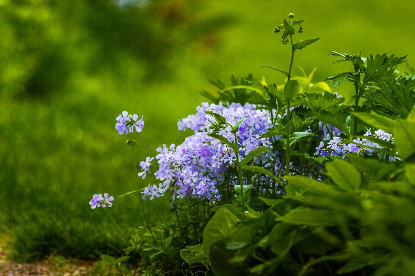 Chanticleer花园,有梦想的季节_图1-30