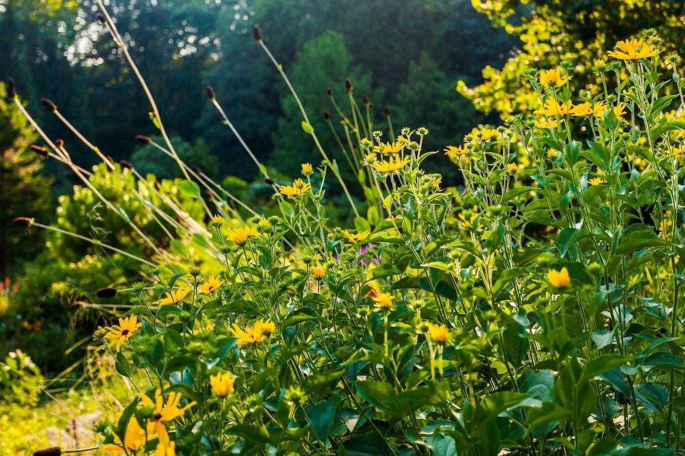 Chanticleer花园,有梦想的季节_图1-31