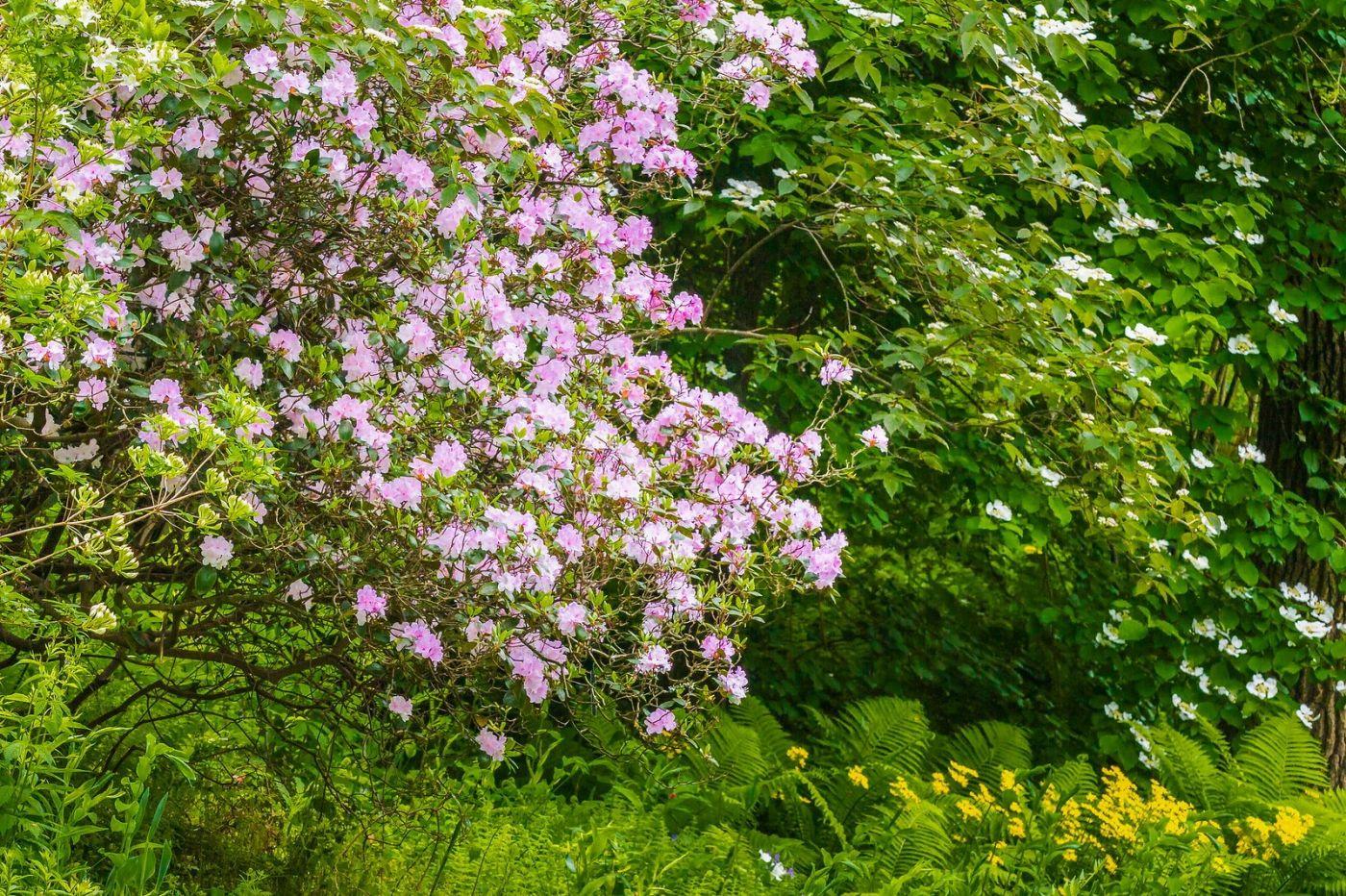 Chanticleer花园,有梦想的季节_图1-32