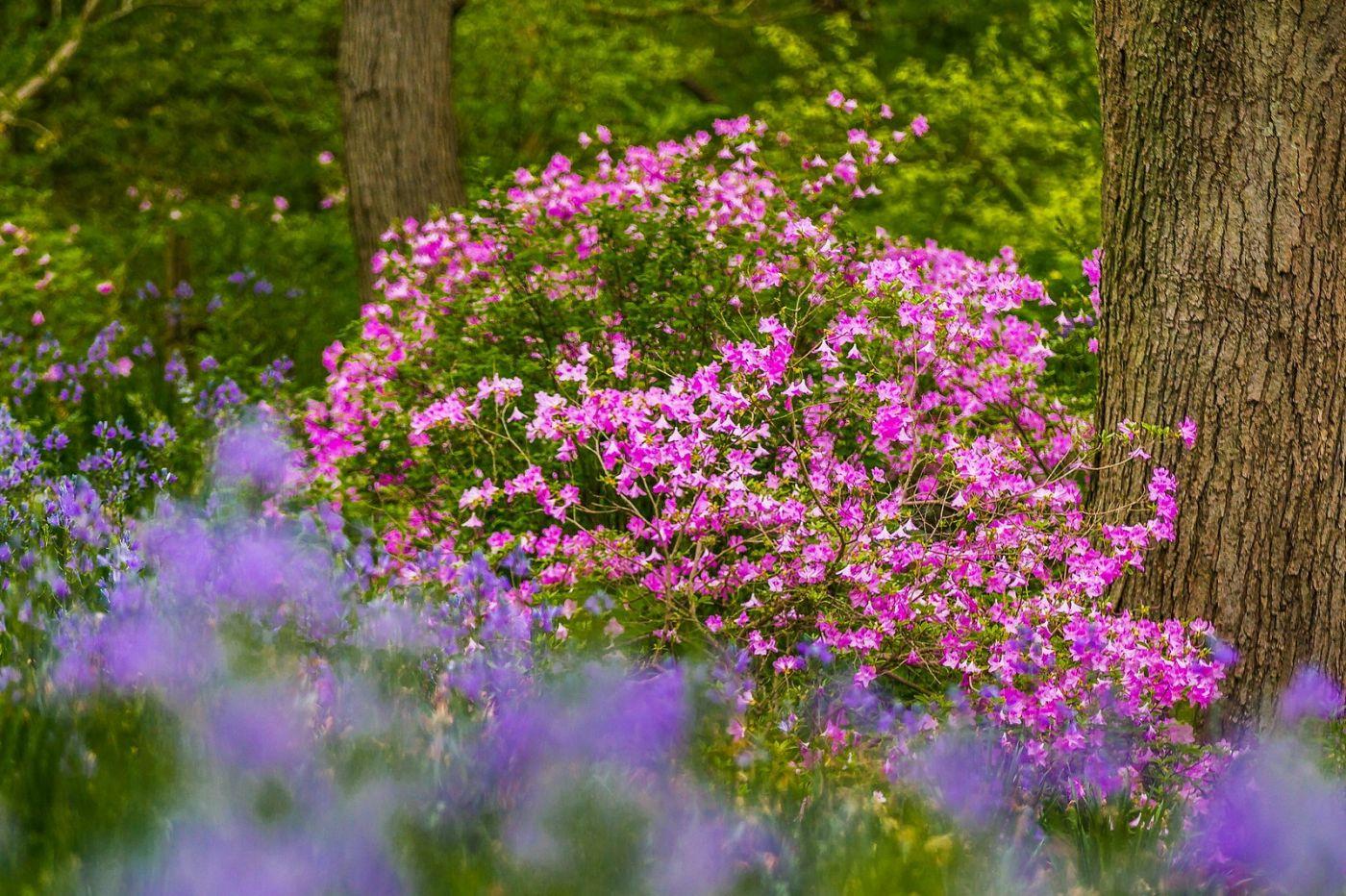 Chanticleer花园,有梦想的季节_图1-35