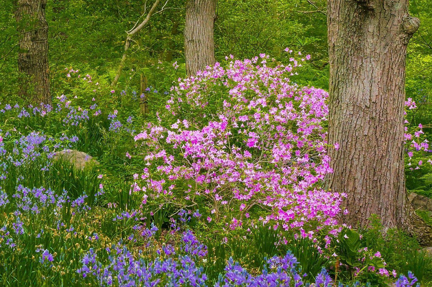 Chanticleer花园,有梦想的季节_图1-36