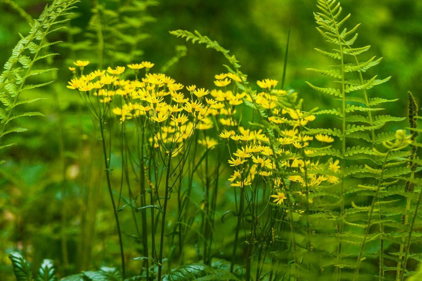 Chanticleer花园,有梦想的季节_图1-34