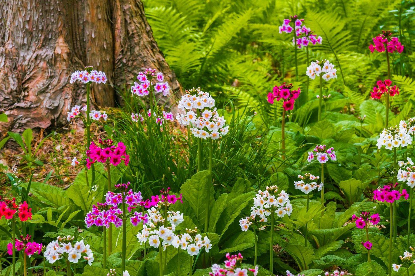 Chanticleer花园,有梦想的季节_图1-37