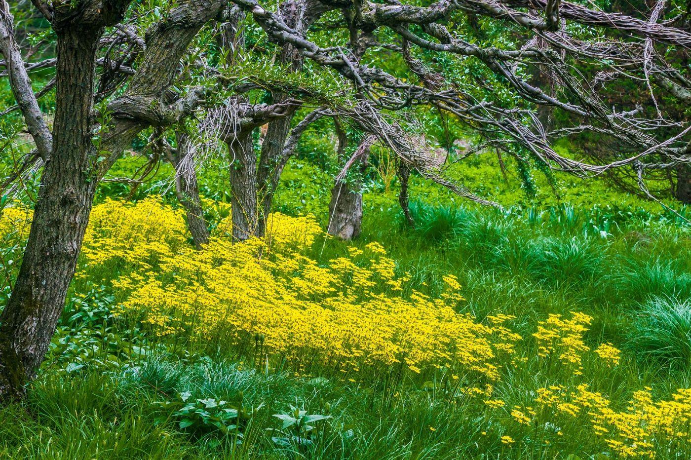 Chanticleer花园,有梦想的季节_图1-33