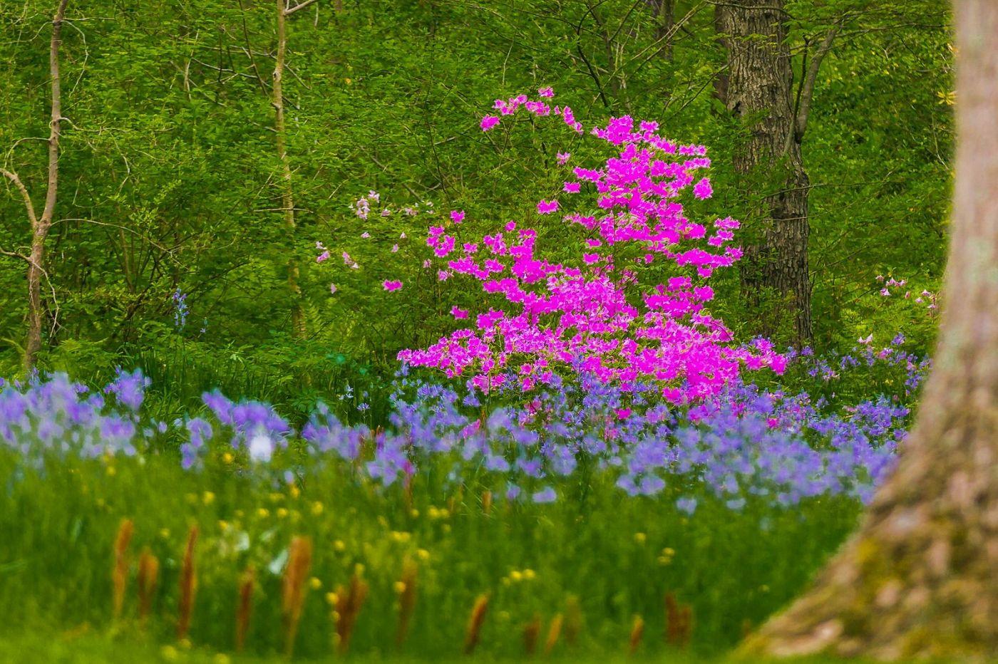 Chanticleer花园,有梦想的季节_图1-39