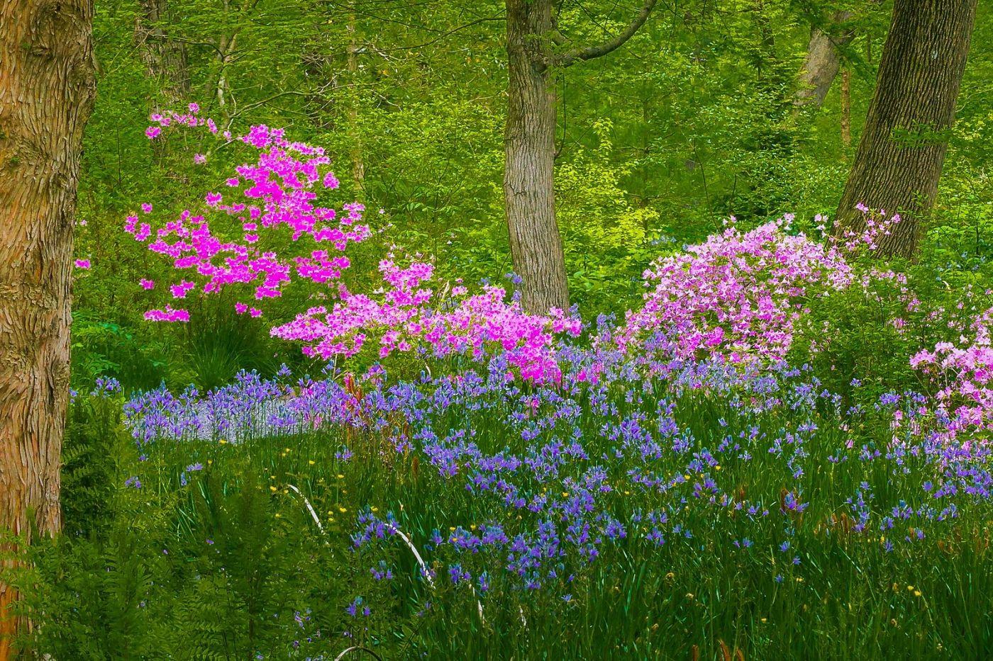 Chanticleer花园,有梦想的季节_图1-40