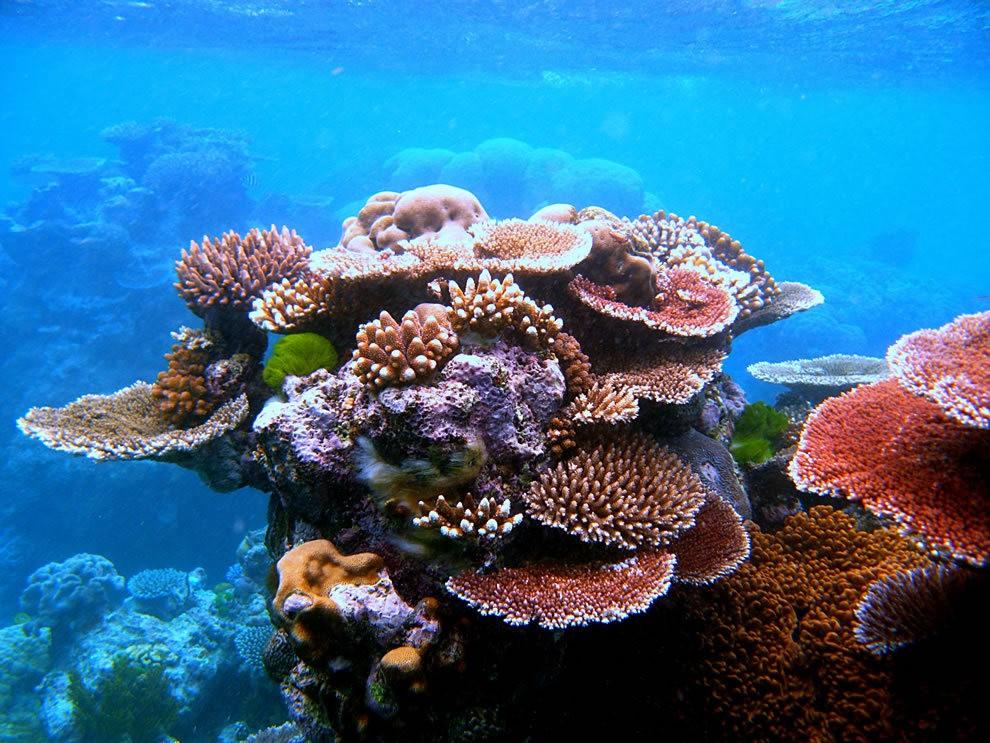 超級大堡礁_圖1-3