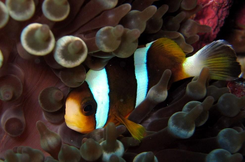 超級大堡礁_圖1-4