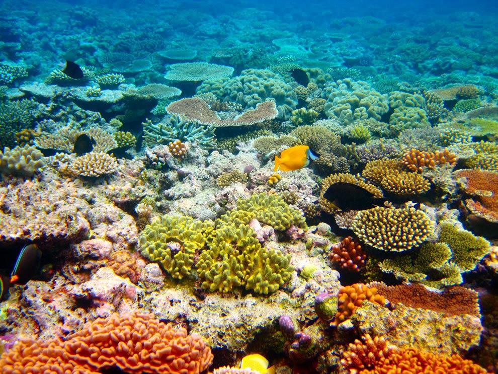 超級大堡礁_圖1-7