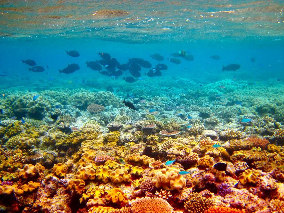 超級大堡礁_圖1-8