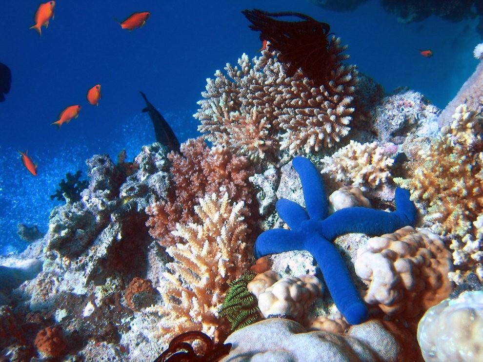 超級大堡礁_圖1-9