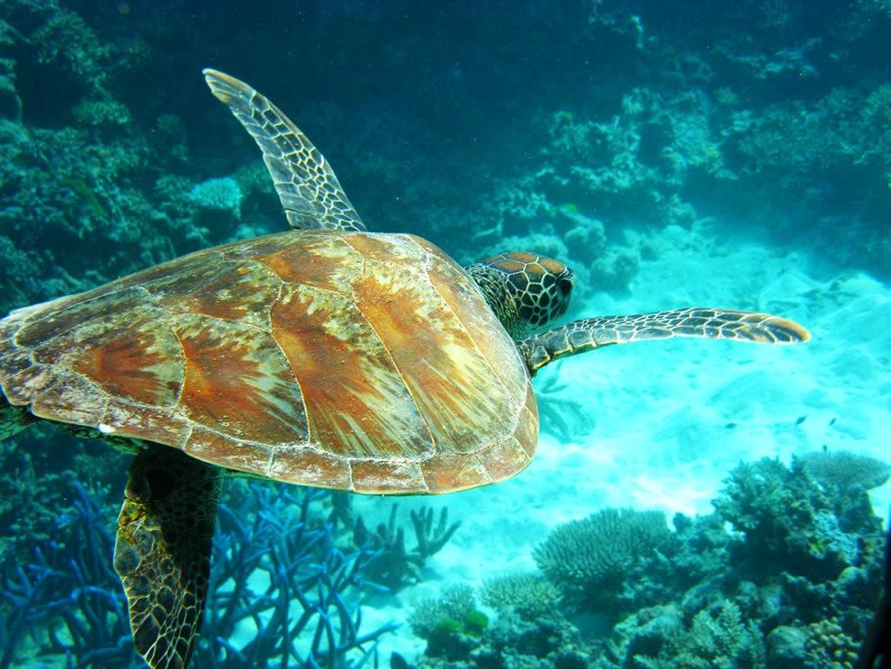 超級大堡礁_圖1-12