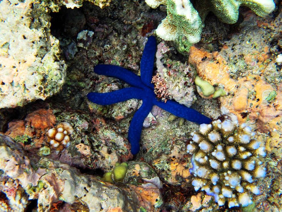 超級大堡礁_圖1-18